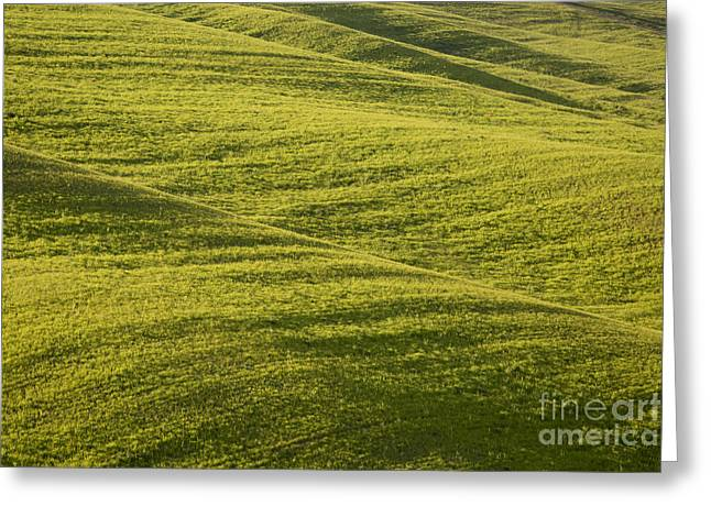 Tuscan Hills Greeting Cards - Tuscan Green Greeting Card by Brian Jannsen
