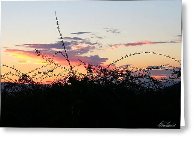 Tuscan Sunset Greeting Cards - Tuscan Sunset 2 Greeting Card by Diana Haronis