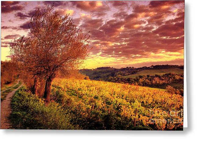 Tuscan Sunset Greeting Cards - Tuscany Sunset Vineyard San Gimignano Greeting Card by Chase Lindberg