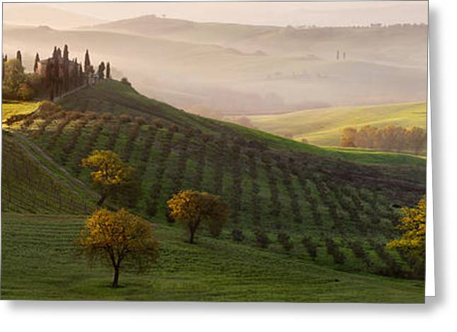 Olives Greeting Cards - Tutte Le Strade Portano A Belvedere Greeting Card by Margarita Chernilova