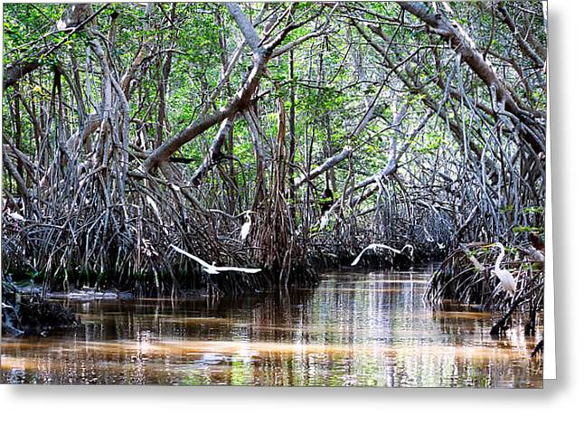 Mangrove Forest Greeting Cards - Twelve Egrets And An Ibis Greeting Card by Renee Sullivan