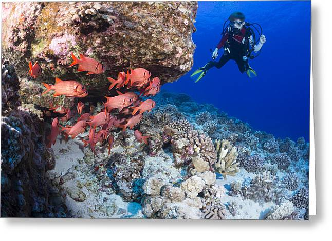 Scuba Diving Greeting Cards - Twelve Year Old Junior Certified Scuba Greeting Card by Dave Fleetham