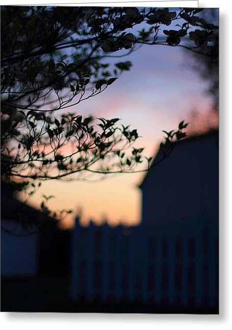 Indiana Dogwood Trees Greeting Cards - Twilight Silhouette Greeting Card by Andrea Kappler