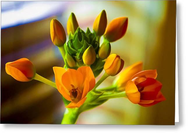 Tangerines Greeting Cards - Twilight Tangerine Greeting Card by Dennis Reagan