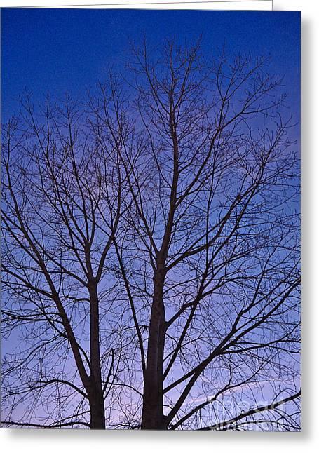 Tavira Greeting Cards - Twilight Tree Greeting Card by Angelo DeVal