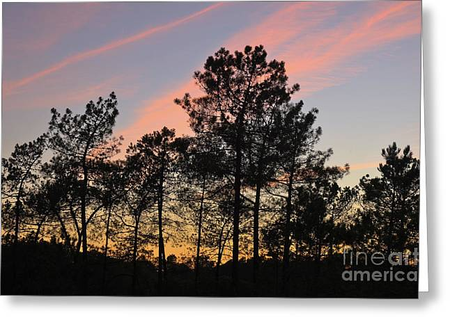 Twilight Tree Silhouettes Greeting Card by Angelo DeVal
