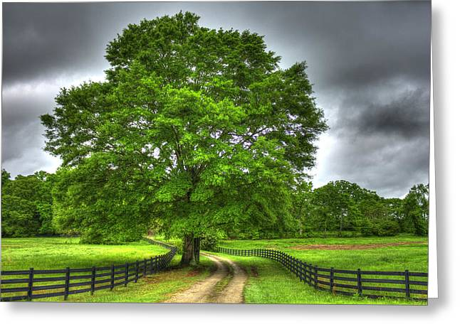 Fence Row Greeting Cards - Twin Oaks Drive Southern Living Greeting Card by Reid Callaway