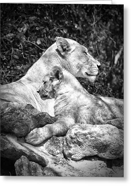 Lioness Greeting Cards - Twin Sphinx Greeting Card by Ghostwinds Photography