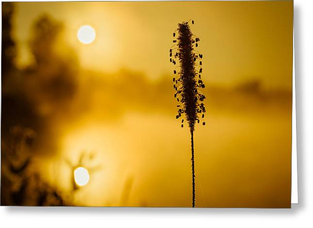 Fog Greeting Cards - Twin Suns warm Dew covered grass Greeting Card by Chris Bordeleau