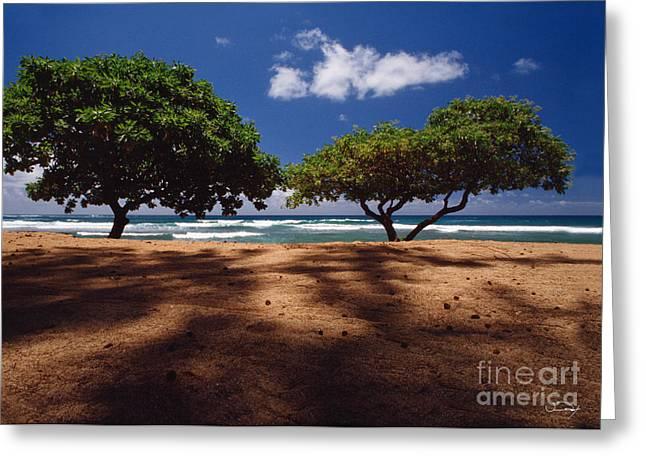 Twin Trees Kauai Greeting Card by Vance Fox