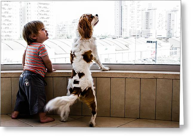 Dogs Photographs Greeting Cards - Twins Greeting Card by Nir Blatt