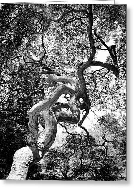 Fantasy Bark Greeting Cards - Twist of Fate Greeting Card by Colleen Kammerer
