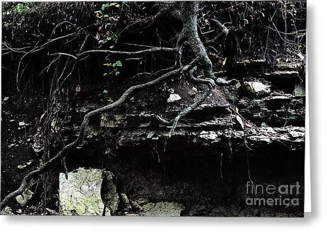 Tree Roots Photographs Greeting Cards - Twisted Greeting Card by Fred Lassmann