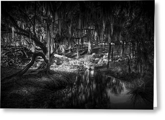 Winter Storm Greeting Cards - Twisted Oak Greeting Card by Marvin Spates