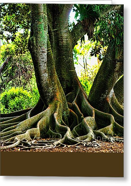 Artistic Photography Greeting Cards - Twisted Greeting Card by Tom Prendergast