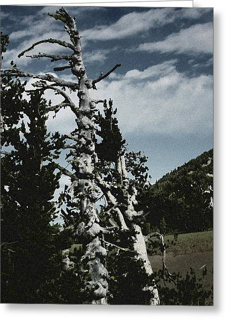 Line Greeting Cards - Twisted Whitebark Pine Tree - Crater Lake - Oregon Greeting Card by Christine Till