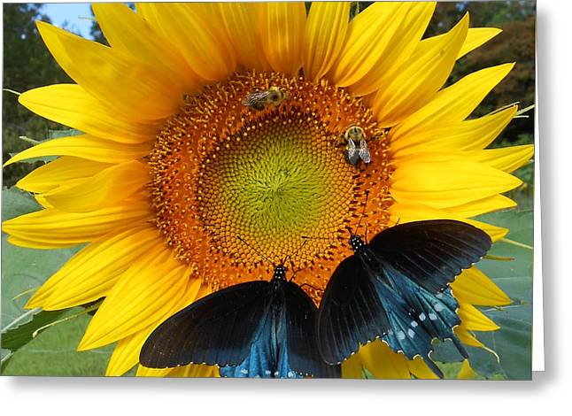 Renewing Greeting Cards - Two Bees And Not Two Bees Greeting Card by Diannah Lynch