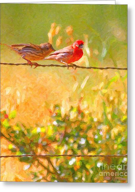 Finch Greeting Cards - Two Birds On A Wire Greeting Card by Wingsdomain Art and Photography