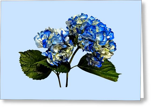 Gardening Greeting Cards - Two Blue Hydrangea With Leaves Greeting Card by Susan Savad