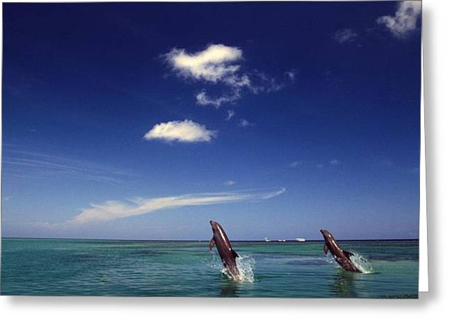 Two Bottlenose Dolphins Dancing Across Greeting Card by Natural Selection Craig Tuttle