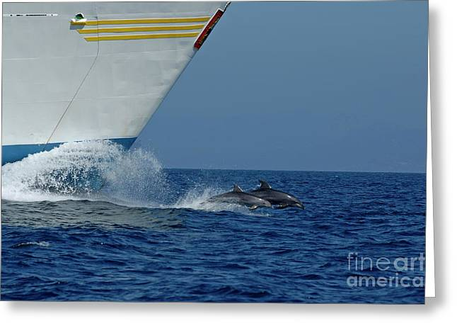 Emergence Greeting Cards - Two bottlenose dolphins swimming in front of a ship Greeting Card by Sami Sarkis
