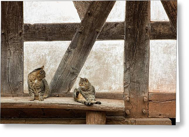Wooden Building Greeting Cards - Two cats, 17th century Greeting Card by Heinz Dieter Falkenstein