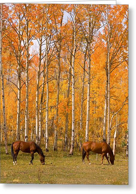 Two Colorado High Country Autumn Horses Greeting Card by James BO  Insogna