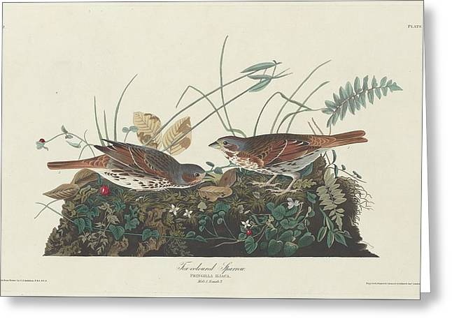 Sparrow Greeting Cards - Two-Colored Sparrow Greeting Card by John James Audubon