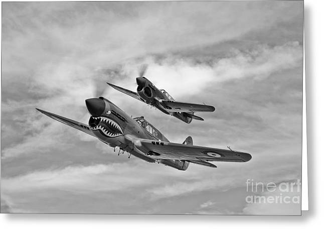 Nose Art Greeting Cards - Two Curtiss P-40 Warhawks In Flight Greeting Card by Scott Germain