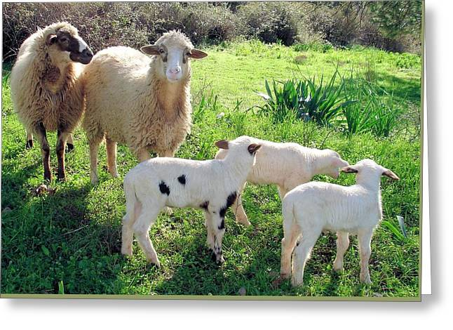 Naivety Greeting Cards - Two Ewes and Three Lambs Grazing Greeting Card by Tracey Harrington-Simpson