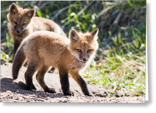 Two Fox Kits Playing Greeting Card by Mindy Musick King