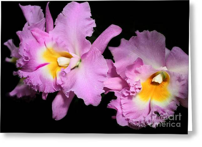 Duet Greeting Cards - Two Frilly Orchids Greeting Card by Sabrina L Ryan