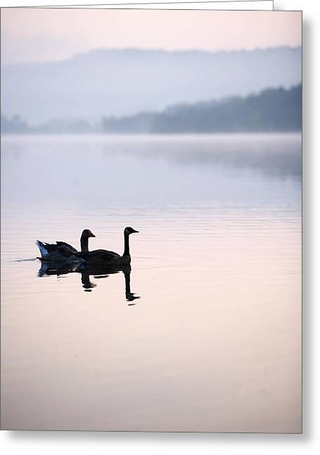 Two Geese On Lake With Fog And Forested Greeting Card by Gillham Studios