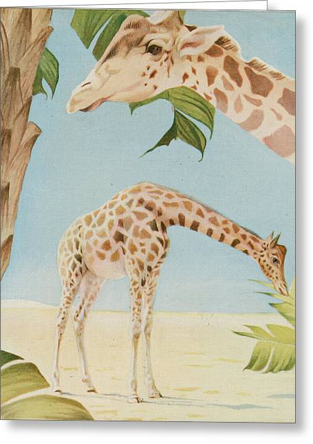 Museum Paintings Greeting Cards - Two Giraffes Greeting Card by Art Museum