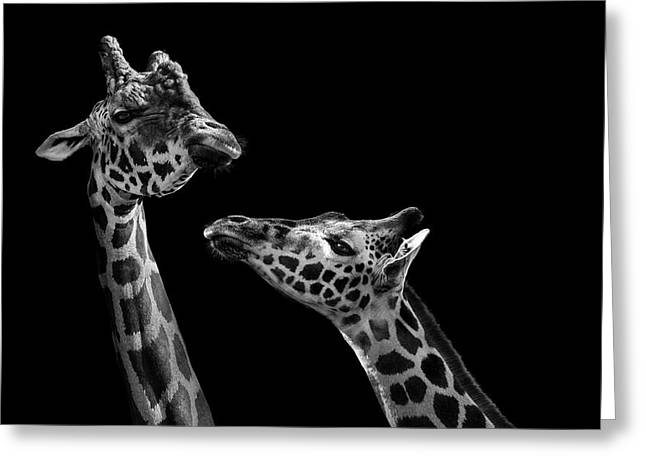 Two Giraffes In Black And White Greeting Card by Lukas Holas