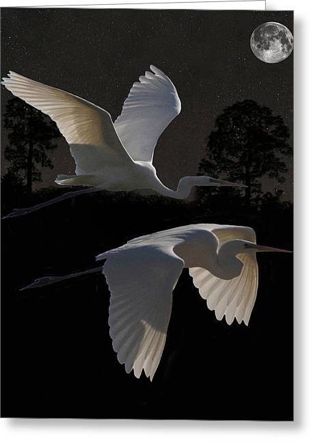 Acroplolis Greeting Cards - Two Great Egrets In Flight Greeting Card by Eric Kempson