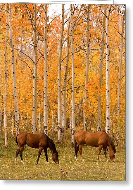 The Lightning Man Greeting Cards - Two Horses Grazing in the Autumn Air Greeting Card by James BO  Insogna
