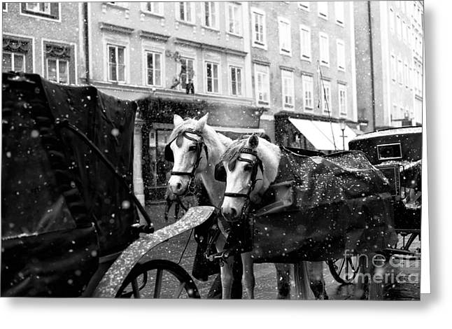 Two Horses In Salzburg Greeting Card by John Rizzuto