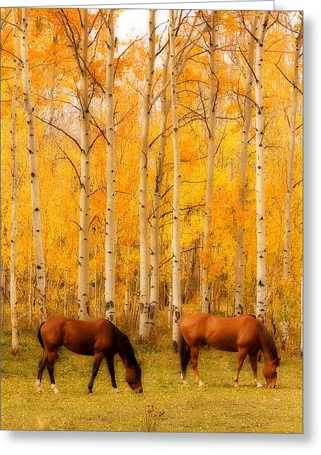 Autumn Prints Greeting Cards - Two Horses in the Autumn Colors Greeting Card by James BO  Insogna