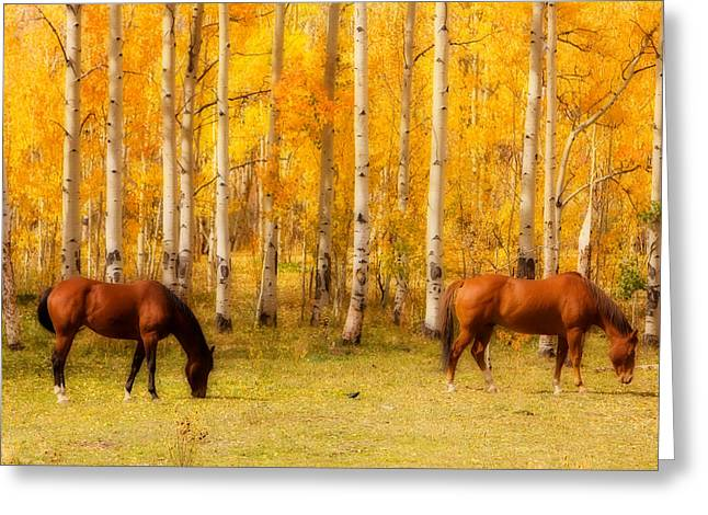 The Lightning Man Greeting Cards - Two Horses in the Colorado Fall Foliage Greeting Card by James BO  Insogna