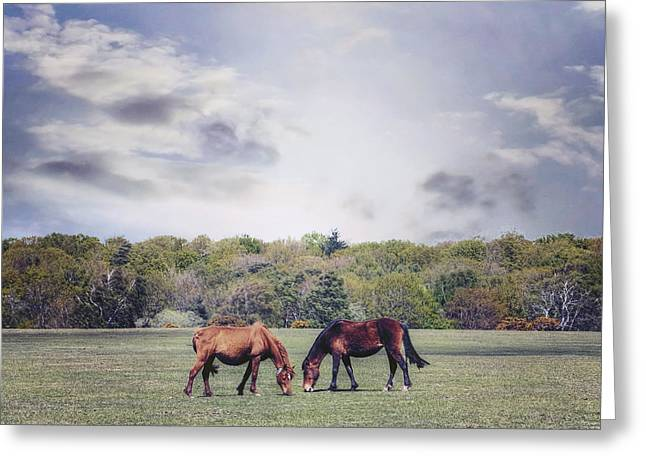 New Forest Pony Greeting Cards - Two Horses Greeting Card by Joana Kruse