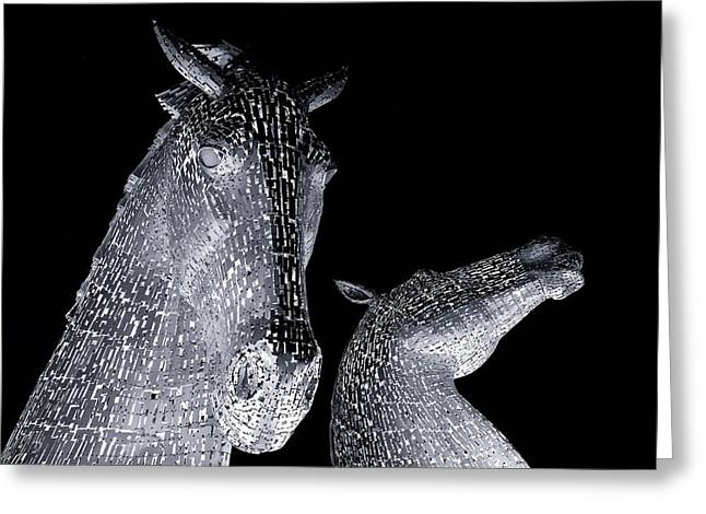 Two Horses Greeting Card by Stephen Taylor