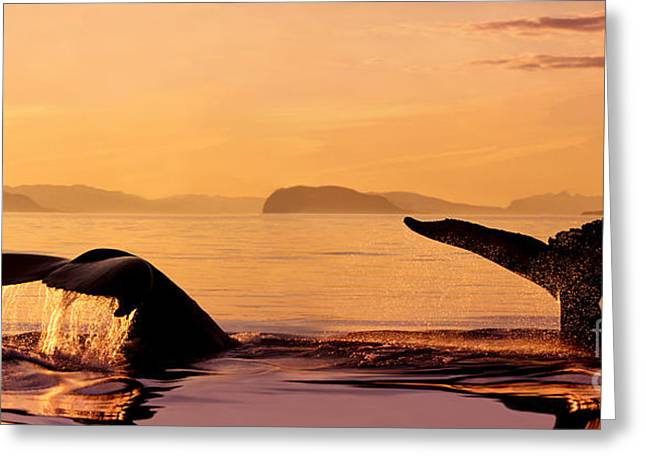 Amazing Sunset Greeting Cards - Two Humpback Whales Greeting Card by John Hyde - Printscapes