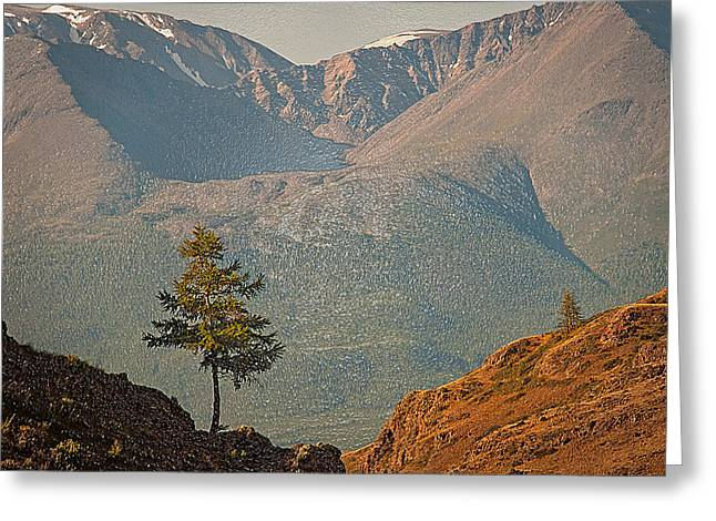 Snowy Night Night Greeting Cards - Two Lonely Trees Greeting Card by Scott Mendell