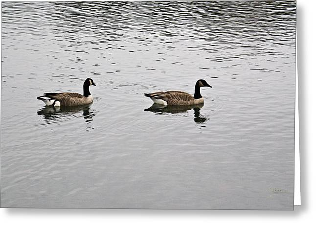 Two Lovely Canadian Geese Greeting Card by Douglas Barnett
