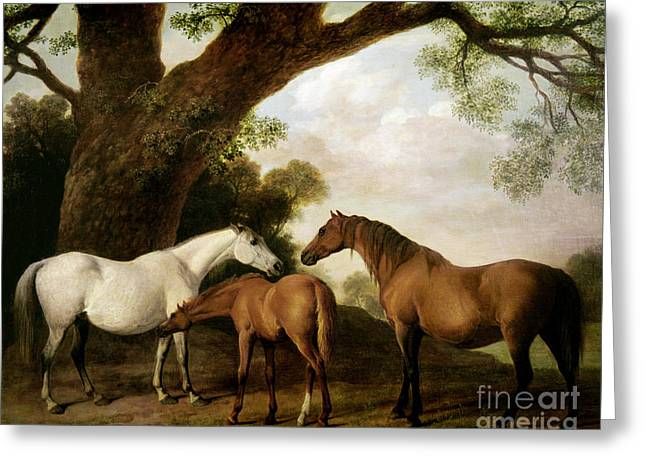 Oak Tree Paintings Greeting Cards - Two Mares and a Foal Greeting Card by George Stubbs