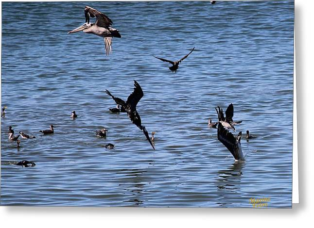 Diving In California Greeting Cards - Two Pelicans Diving  Greeting Card by Gary Canant