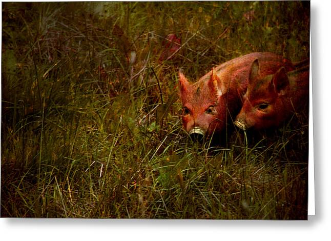 Two piglets Greeting Card by Angel  Tarantella