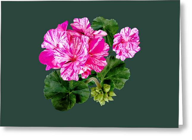 Two Pink And White Striped Geraniums Greeting Card by Susan Savad