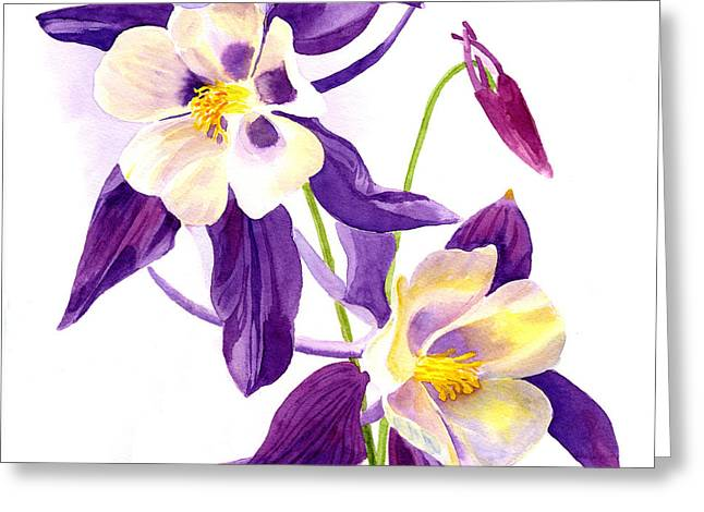 Columbine Greeting Cards - Two Purple Columbine Flower Square Design Greeting Card by Sharon Freeman